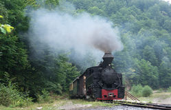 Wood-burning locomotive in forest Royalty Free Stock Image