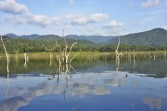 Wood carcasses on water and blue sky reflects the surface in Srinakarin dam, Kanjanaburi. Province, Thailand Stock Photo