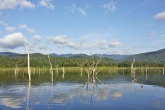 Wood carcasses on water and blue sky reflects the surface in Srinakarin dam. Kanjanaburi province, Thailand Stock Photos
