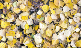 Wood carpet of autumn leaves Stock Photography