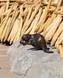 Wood carved beavers Royalty Free Stock Image