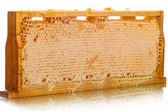 Wood Cells of the hive with honey Stock Photos