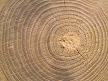 Wood Center MACRO Stock Image