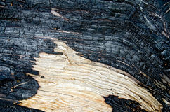 Wood charred Stock Photography