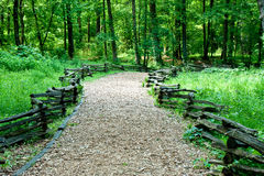 Wood Chip Trail Into Green Summer Forest Stock Photo