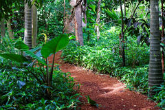 Wood-chipped Path Through Tropical Rain Forest