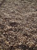 Wood chips 2 Royalty Free Stock Photos