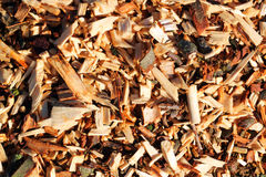 Wood chips or scrap background. Royalty Free Stock Image