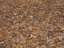 Wood chips. Background with wood chips on the ground Stock Image