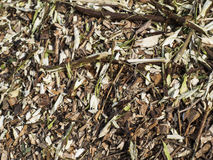 Wood chips. Environmental Organic Wood Chip Background Stock Image