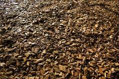 Wood Chips Flakes Chunks Pieces Brown guld- solskengarnering P royaltyfria bilder