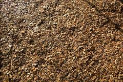 Wood Chips Flakes Chunks Pieces Brown guld- solskengarnering P royaltyfri fotografi