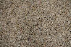 Wood chips on the forrest floor. A huge amount of wood chips lying on the forrest floor royalty free stock photography