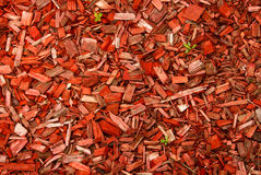 Wood chips and green stems. Stock Photo