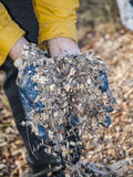 Wood chips in hand Stock Photography