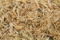 Wood chips. Pieces of old pine wood. stock photo