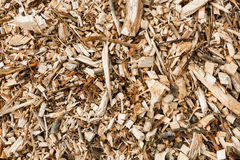 Wood chips from pruned branches from close Stock Images