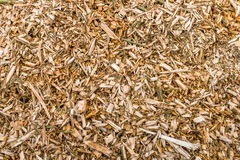 Wood chips after pruning of trees from close stock images