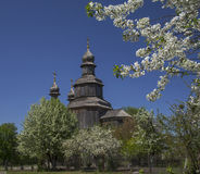Wood church surrounded with blossom trees Stock Photography
