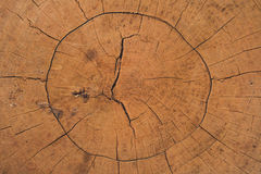 Wood circle cracked background. Royalty Free Stock Images
