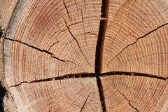 Wood circle texture slice background. Tree rings. Royalty Free Stock Image