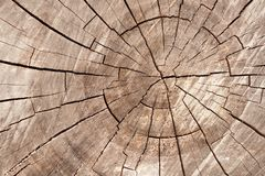 Wood circle texture slice background. Tree rings. Royalty Free Stock Photography