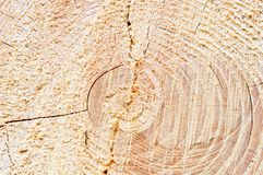 Wood Circles Detail Royalty Free Stock Photo