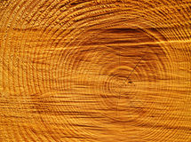 Wood circles detail. Detail view of the circles typical of wood royalty free stock photography
