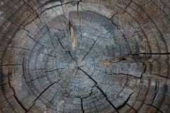 Wood Close Up Stock Photo