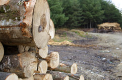 Cut tree logs. Close-up of a logs neatly stacked near the forest path. Forest business Stock Image