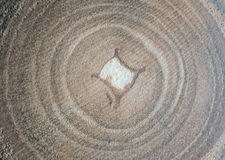 Wood. Close up shot of natural wood cut texture, tree ring Royalty Free Stock Photography
