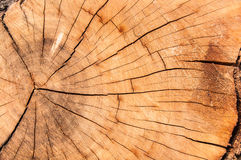 Wood Closeup. Wood piece closeup. Chopped Wood. Fire Wood. Cutting down tree Royalty Free Stock Photos