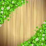 Wood with clover Stock Images
