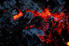 The wood coal burns on fire. Closeup of the wood coal burns on fire Royalty Free Stock Image