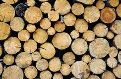 Wood collected and aranged for the winter Stock Image