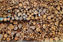 Wood for combustion royalty free stock photography