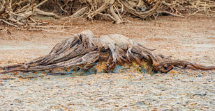 Wood composition left over on the Pacific Ocean beach at low tid Stock Photos
