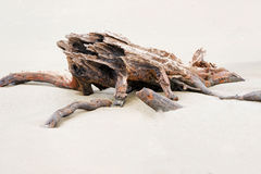 Wood composition left over on the Pacific Ocean beach at low tid Stock Images
