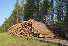 Wood for construction. Destruction forests death green human activities Royalty Free Stock Photography