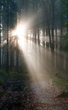 Wood with contreyour sun rays Royalty Free Stock Image