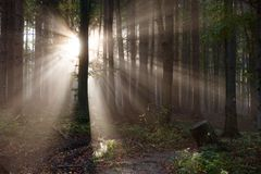Wood with contreyour sun rays Royalty Free Stock Images