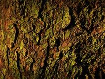 Wood cortex Royalty Free Stock Photography