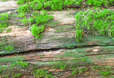 Wood covered with moss Stock Photos