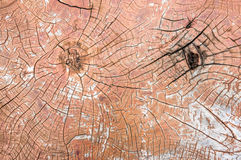 Wood crack background Stock Image