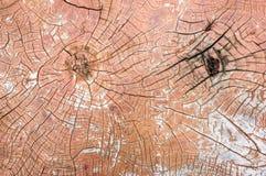 Wood crack background Stock Image