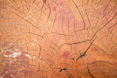 Wood crack background Royalty Free Stock Photo