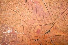 Wood crack background Royalty Free Stock Photo