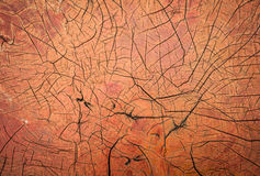 Wood crack background Stock Images