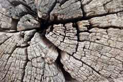 Wood cracks. Texture closeup Old wood cracks royalty free stock photos