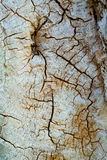 Wood Cracks Texture Stock Images
